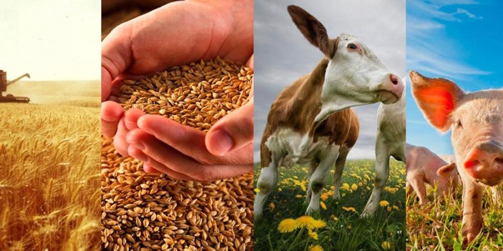 В России введено патентное налогообложение животноводства и растениеводства