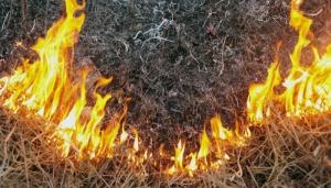 На территории Николаевской области продолжает гореть сухая трава и камыш