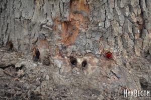 На Намыве неизвестные погубили редкое дерево. Жители уверены - будет киоск