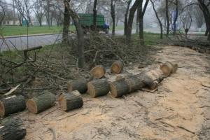 Озеленением в Заводском районе Николаева займется предприниматель, пойманный на незаконной рубке деревьев