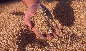 Налоговики предотвратили контрабанду зерна через порты Одесской области