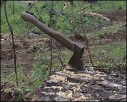 Коррупция и лесоповал: как в Херсоне местные чиновники уничтожают деревья