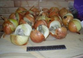 Заключенному Арбузинской колонии наркотики передавали в луковице