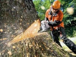 Чиновники Николаевского департамента ЖКХ «потеряли» более 1 тыс. куб. м древесины. Возбуждено уголовное дело