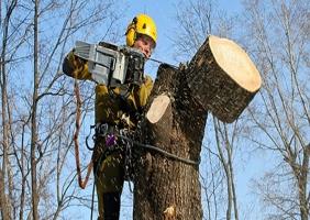 В Херсоне на спил деревьев хотят потратить 920 тыс. грн.