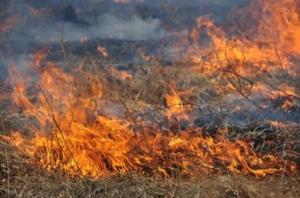 В Чернобыльской зоне спасатели уже  четвертый день не могут потушить пожар