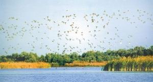 В Одесскую область туристов будут привлекать птицами
