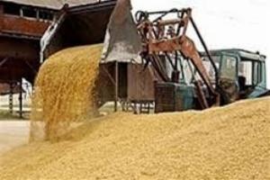 За 2014 год Украина собрала более 60 миллионов тонн зерновых