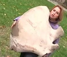 Николаевские волонтеры нашли кость мамонта и решили продать ее на аукционе