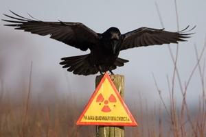 В Чернобыльской зоне может появиться природный заповедник