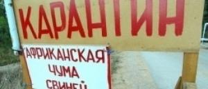 Из-за вспышки африканской чумы в Новоодесском районе введен карантин