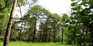 В Коблево сельсовет незаконно изъял из госсобственности 64 га леса