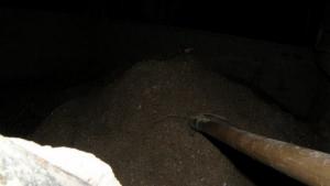 На Намыве песчаных браконьеров поймали «на горячем»