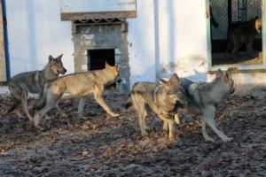 Херсонский зооуголок «из ужасной тюрьмы» превращается в цивилизованное место отдыха