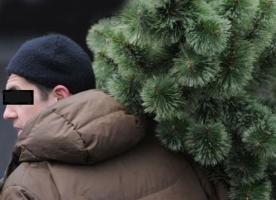 В Варваровке мужчина украл новогоднюю елку прямо с улицы
