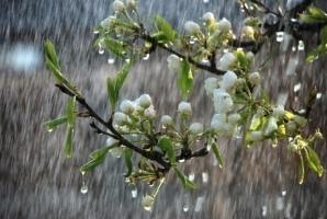 В Украине на завтра обещают дожди и теплую погоду