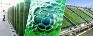Американская компания построит 5 заводов по переработке биомассы в Одесской области