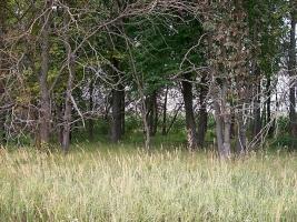 На Николаевщине у женщины отобрали автомобиль и привязали её к дереву в лесополосе