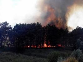 Под Николаевом загорелось 8000 кв. м леса