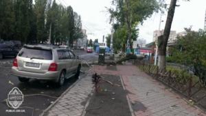 После непогоды в Одессе на машины падали деревья