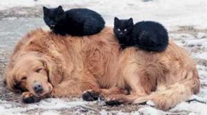 Бродячих животных в Херсоне приютят. Но через год