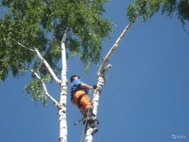 Херсонские коммунальщики отчитались о ревизии деревьев