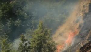 Спасатели тушили масштабный пожар в одесской Аркадии