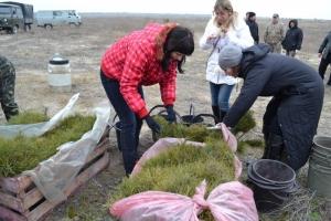 На Херсонщине в первый день весны высажено 25 000 молодых деревьев