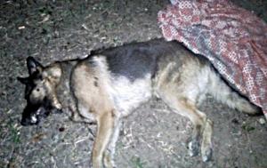 Херсонцы требуют наказать семью садистов, убивших собаку