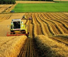 Задолженность по зарплате на государственных агропредприятиях составила 11 млн грн