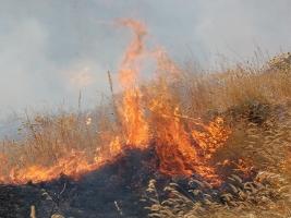 На Николаевщине за сутки спасатели выезжали на ликвидацию пожаров 21 раз