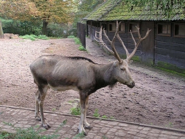 В Херсонском заповеднике родилось потомство у одного из редчайших животных на Земле