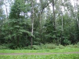 На Николаевщине в лесополосе нашли обгоревшее тело женщины