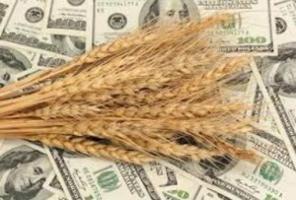 Зерновая госкорпорация растратила полмиллиона долларов бюджетных средств - СБУ