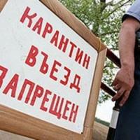 Крымчан пугают неизвестной бабочкой с Херсонщины