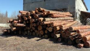 На Херсонщине «накрыли» девять подпольных лесопилок