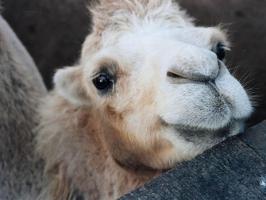 Одесский зоопарк подарит животных Тбилиси