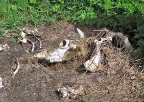 В Херсоне нашли нелегальный скотомогильник