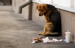Одесские чиновники отчитались о сокращении количества бездомных собак