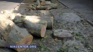 В центре Николаева срубили живое дерево, якобы мешавшее городским коммуникациям