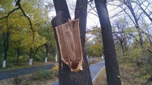 В Одессе работники «Горзелентреста» повредили деревья на Трассе здоровья