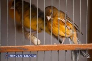 В Николаеве в Народном саду прошла масштабная выставка голубей