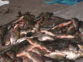 Херсонское рыбное хозяйство – в тройке лидеров