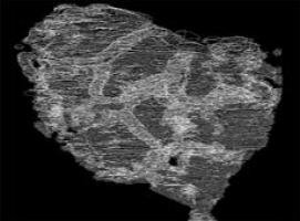 В Австралии нашли древнейшие окаменелые организмы