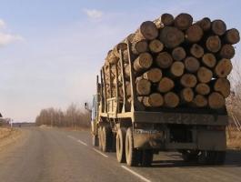В Николаевской области водитель грузовика провозил древесину без соответствующих документов