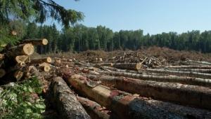 В Николаевской области чиновник незаконно выдал разрешение на вырубку государственного леса
