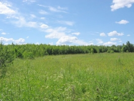 В Николаевской области предприниматель целый год незаконно использовал около 550 га земель