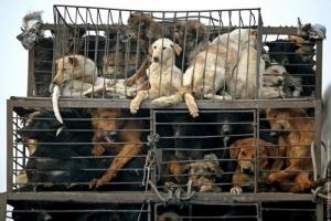 В Херсоне готовятся начать отлов бродячих собак