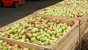 В Крыму уничтожили 15 тонн «незаконно ввезенных» фруктов