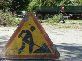 В Николаеве упавшее дерево чуть не покалечило прохожих
